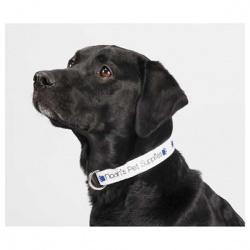 1 x 20 Pet Collar
